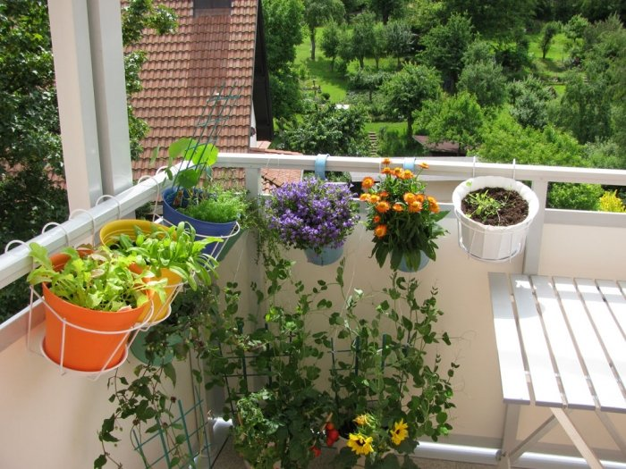 gem se f r balkon welche pflanzen sie wie anbauen k nnen. Black Bedroom Furniture Sets. Home Design Ideas