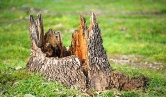 kugelbaum schneiden tipps zum auslichten und r ckschnitt. Black Bedroom Furniture Sets. Home Design Ideas