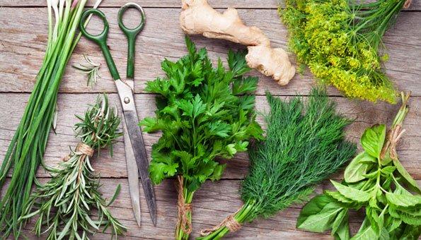 heilkr uter wirkung und zubereitung wichtiger heilpflanzen