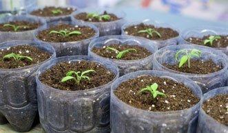 schneegl ckchen pflanzen und vermehren in der bl tezeit. Black Bedroom Furniture Sets. Home Design Ideas